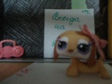 LPS  Young and beautiful от Королины